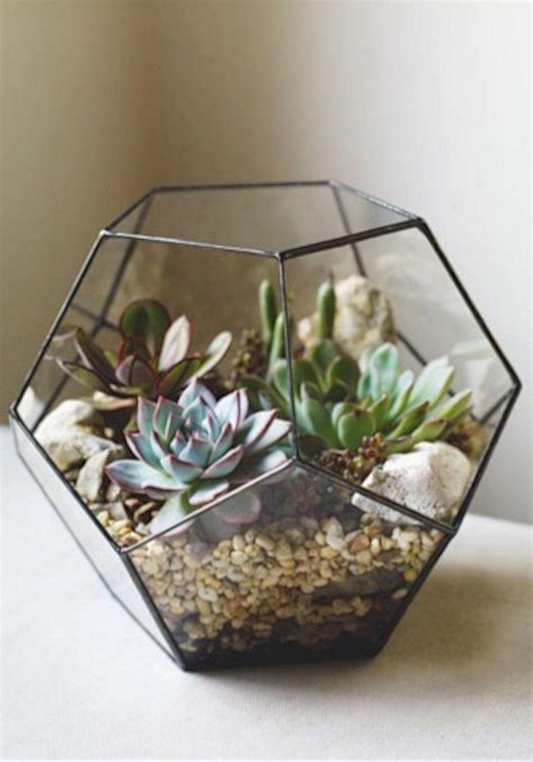 Succulent terrarium garden