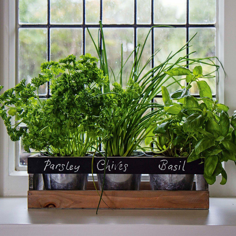 Indoor Herb Garden 270