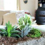 Indoor Succulent Garden 11