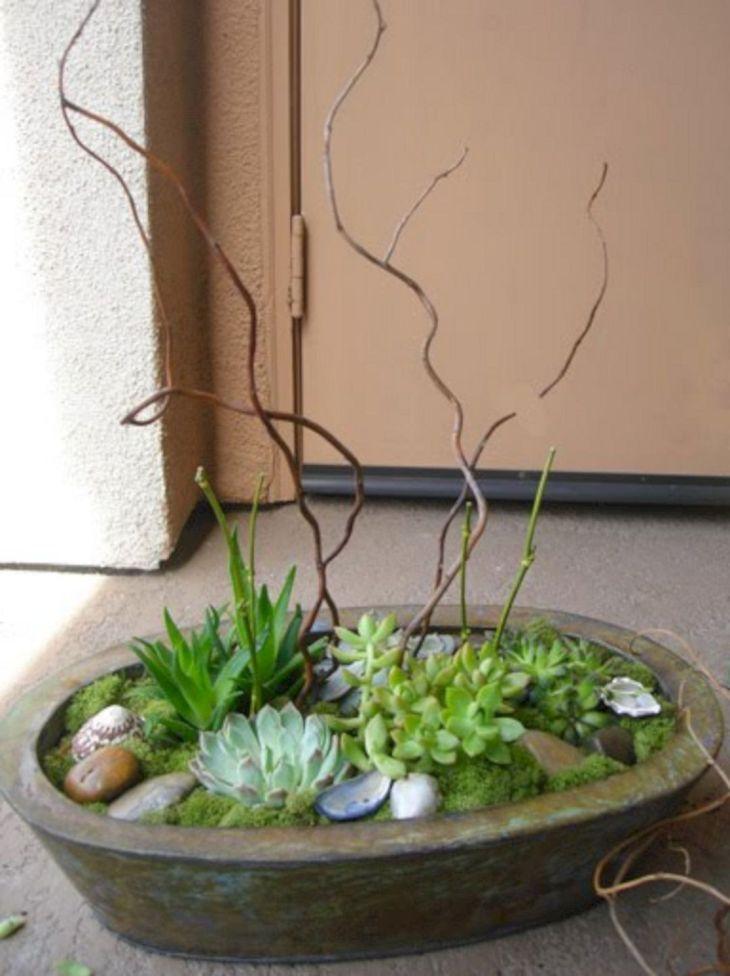 Indoor Succulent Garden 110