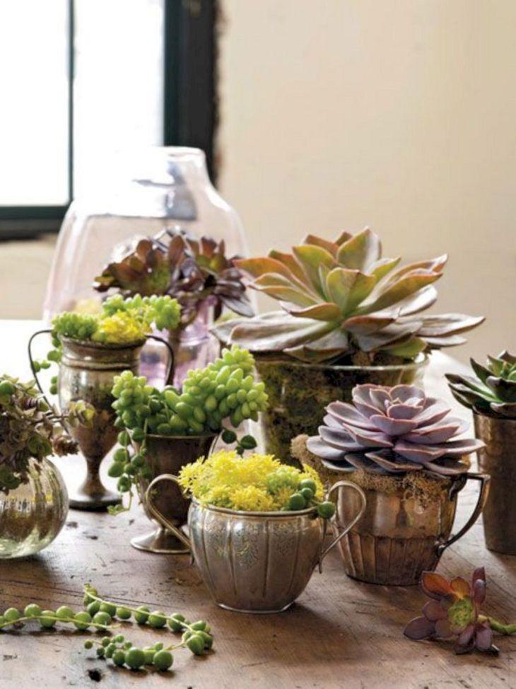 Indoor Succulent Garden 114