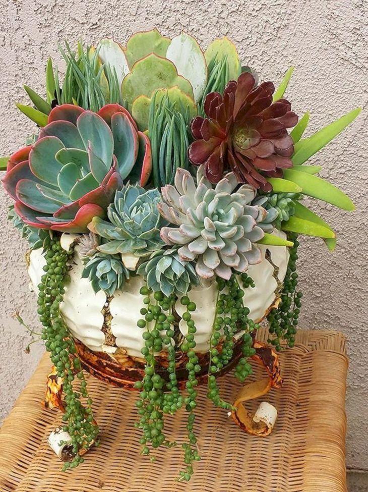 Indoor Succulent Garden 115
