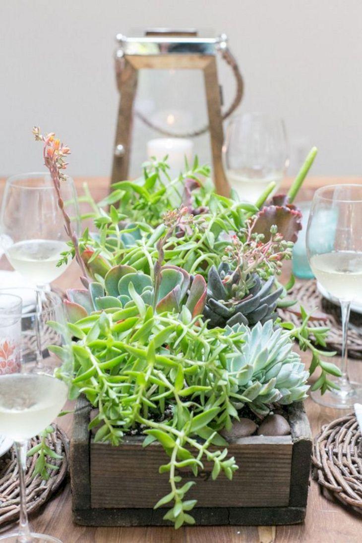 Indoor Succulent Garden 117