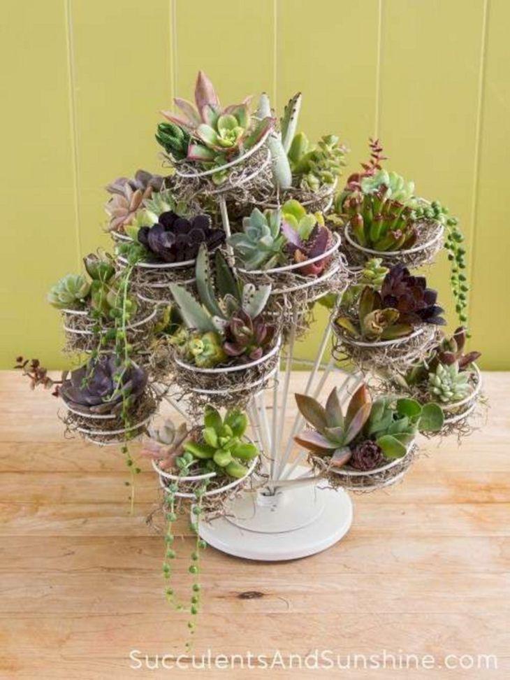 Indoor Succulent Garden 118