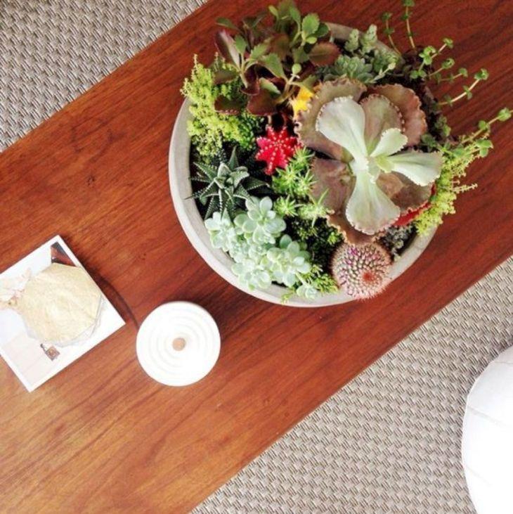 Indoor Succulent Garden 120
