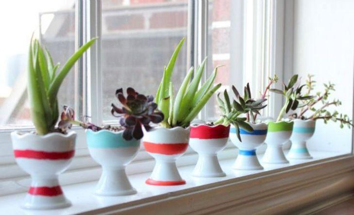 Indoor Succulent Garden 128