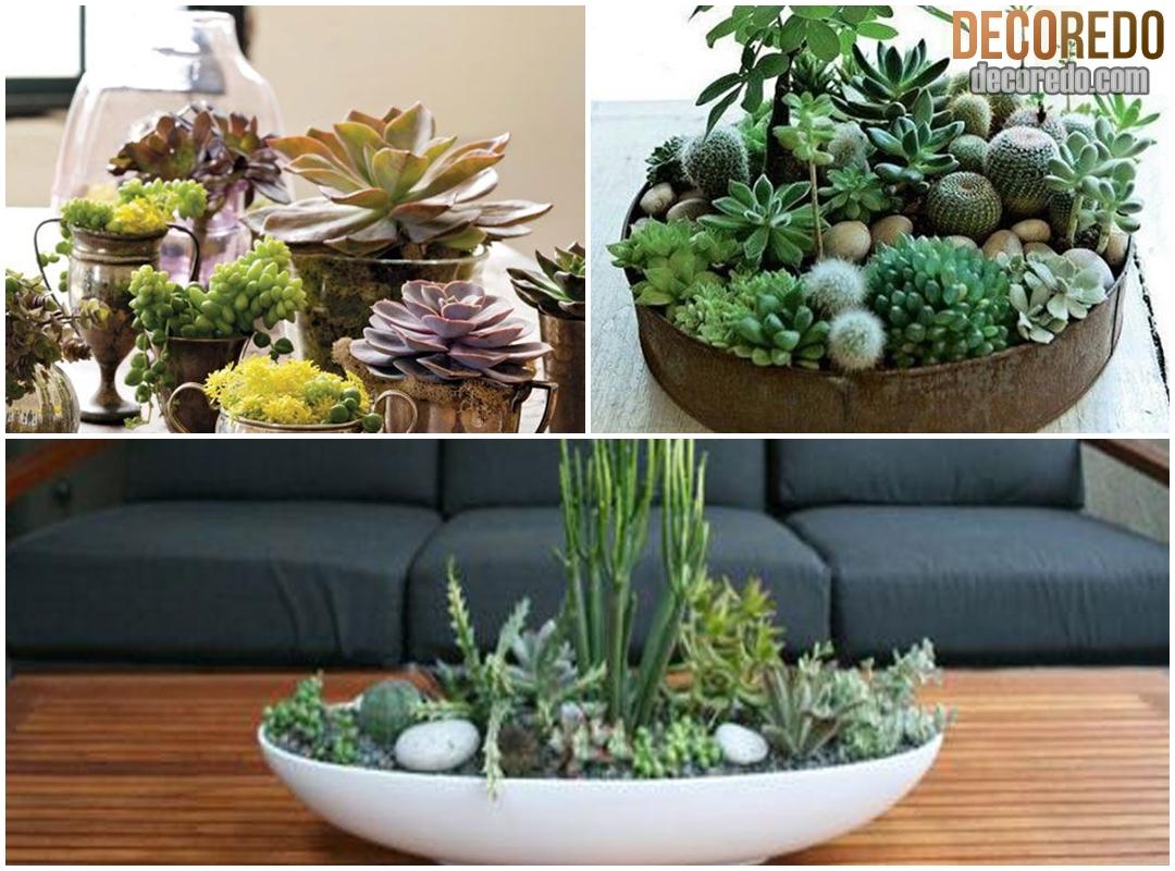 Indoor Succulent Garden Decoredo