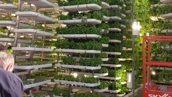 Hydroponic Garden Design