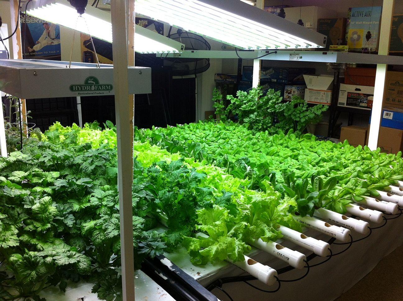 Hydroponic Vegetable Gardens 1
