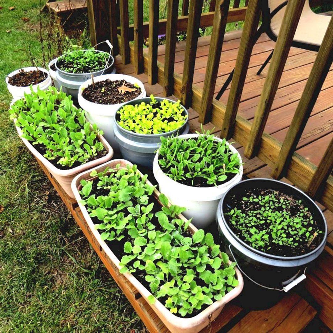 Multifunctional Vegetable Garden 11