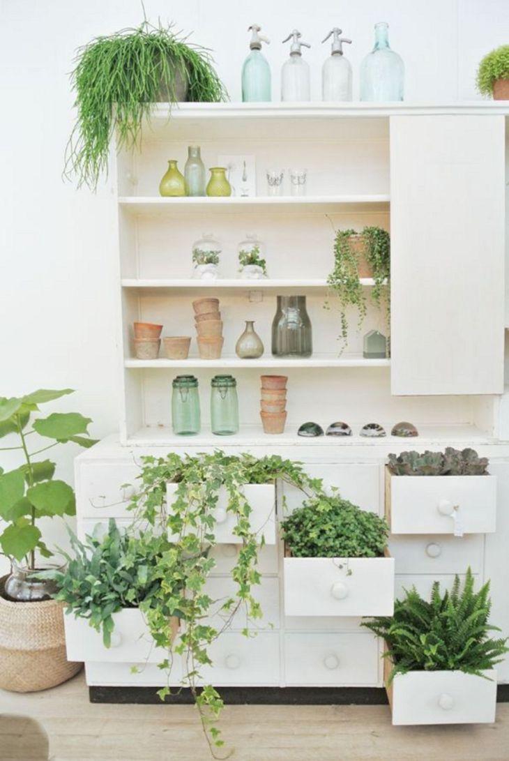 Best Indoor Plans Ideas
