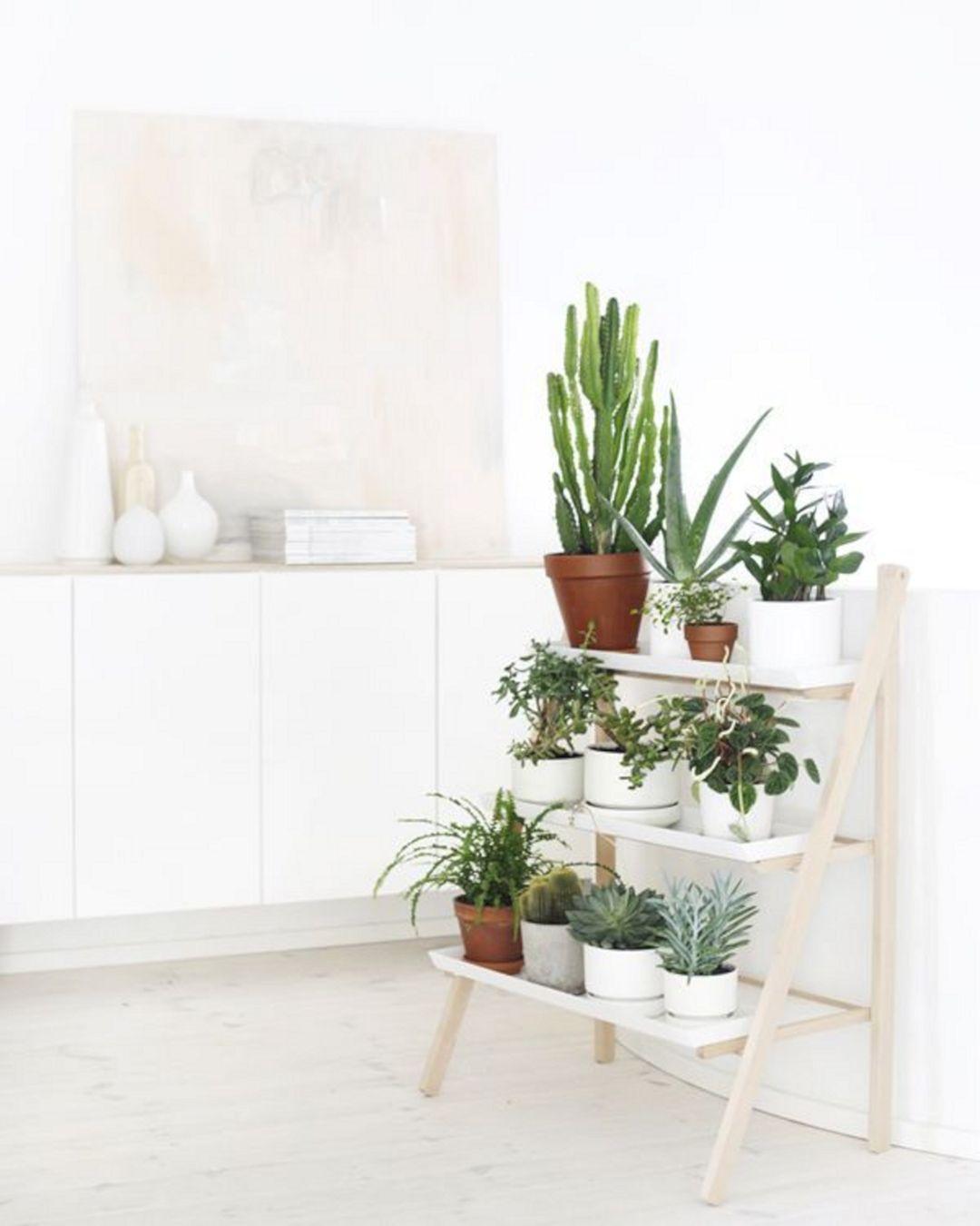 DIY Indoor Plans Shelves