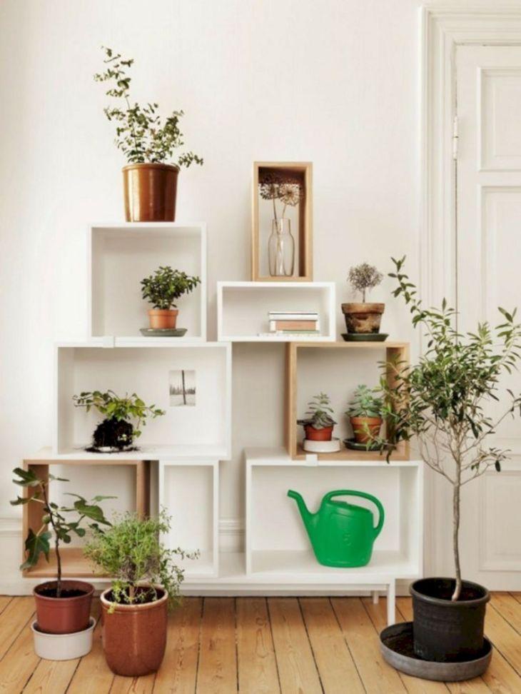 Elegant Indoor Plans Shelf