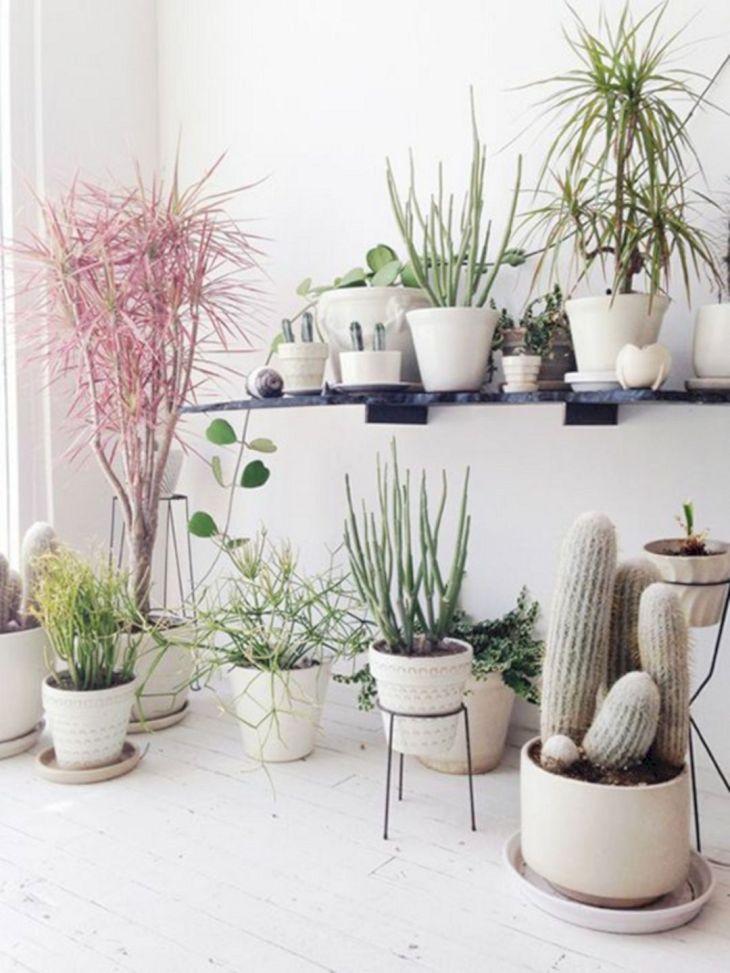 Best Indoor Plants Design