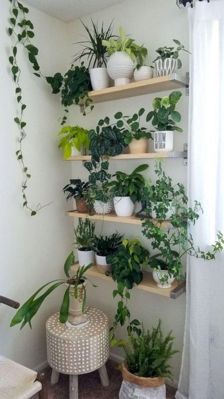 Best Simple Indoor Garden Ideas