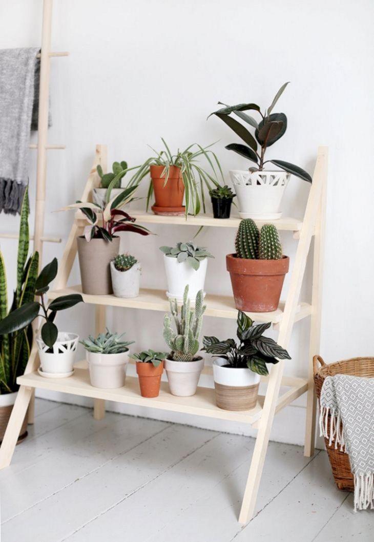 DIY Indoor Garden Plants Ideas