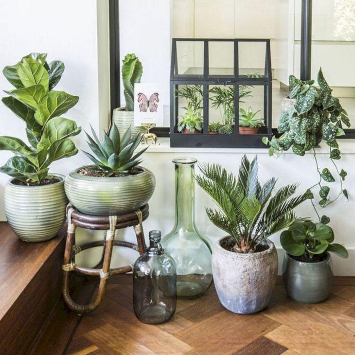 Inspiring Indoor Plants Design