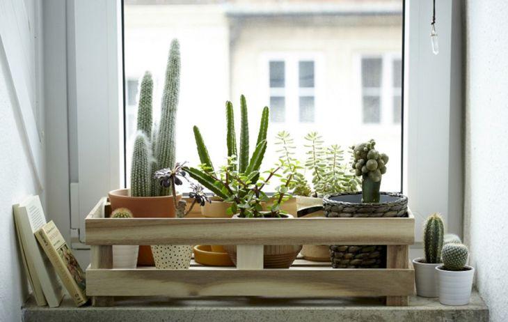 Wonderful Indoor Plants Ideas
