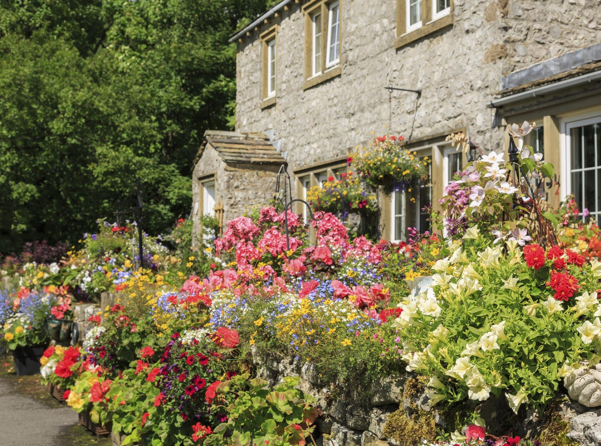 Best Plants for a Cottage Garden and Design Ideas 18