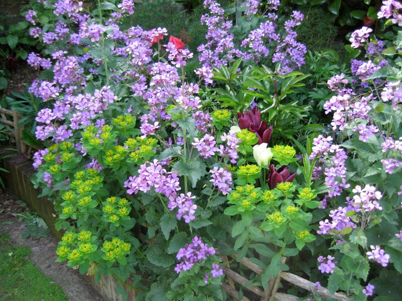 Best Plants for a Cottage Garden and Design Ideas 21