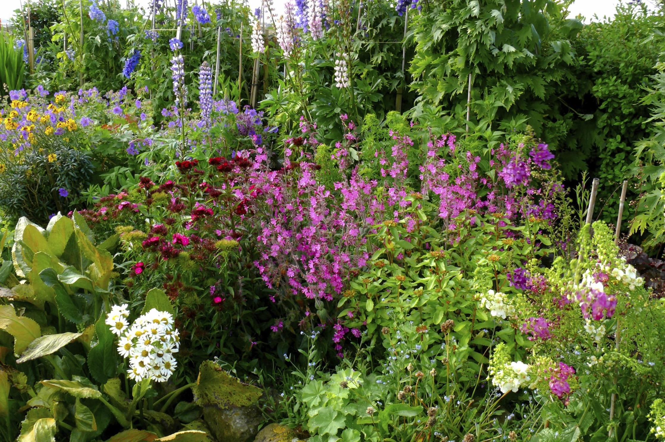 Best Plants for a Cottage Garden and Design Ideas 33