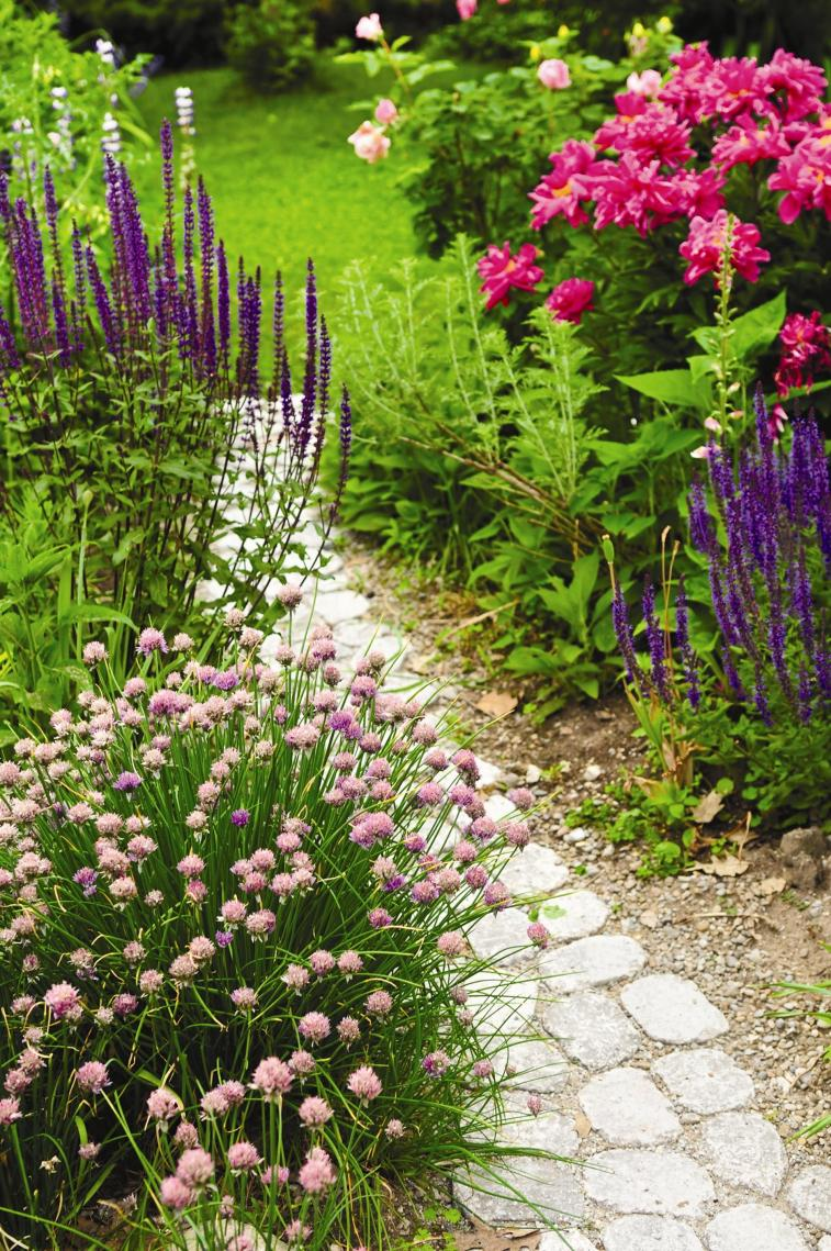 Beautiful Stone Path around Flowers 42