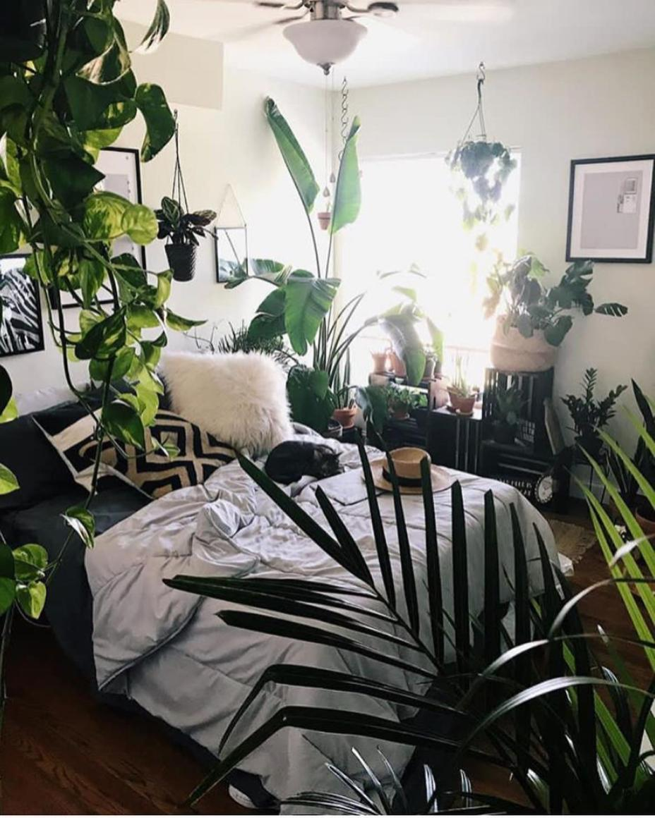 Urban Jungle Room Decor 12
