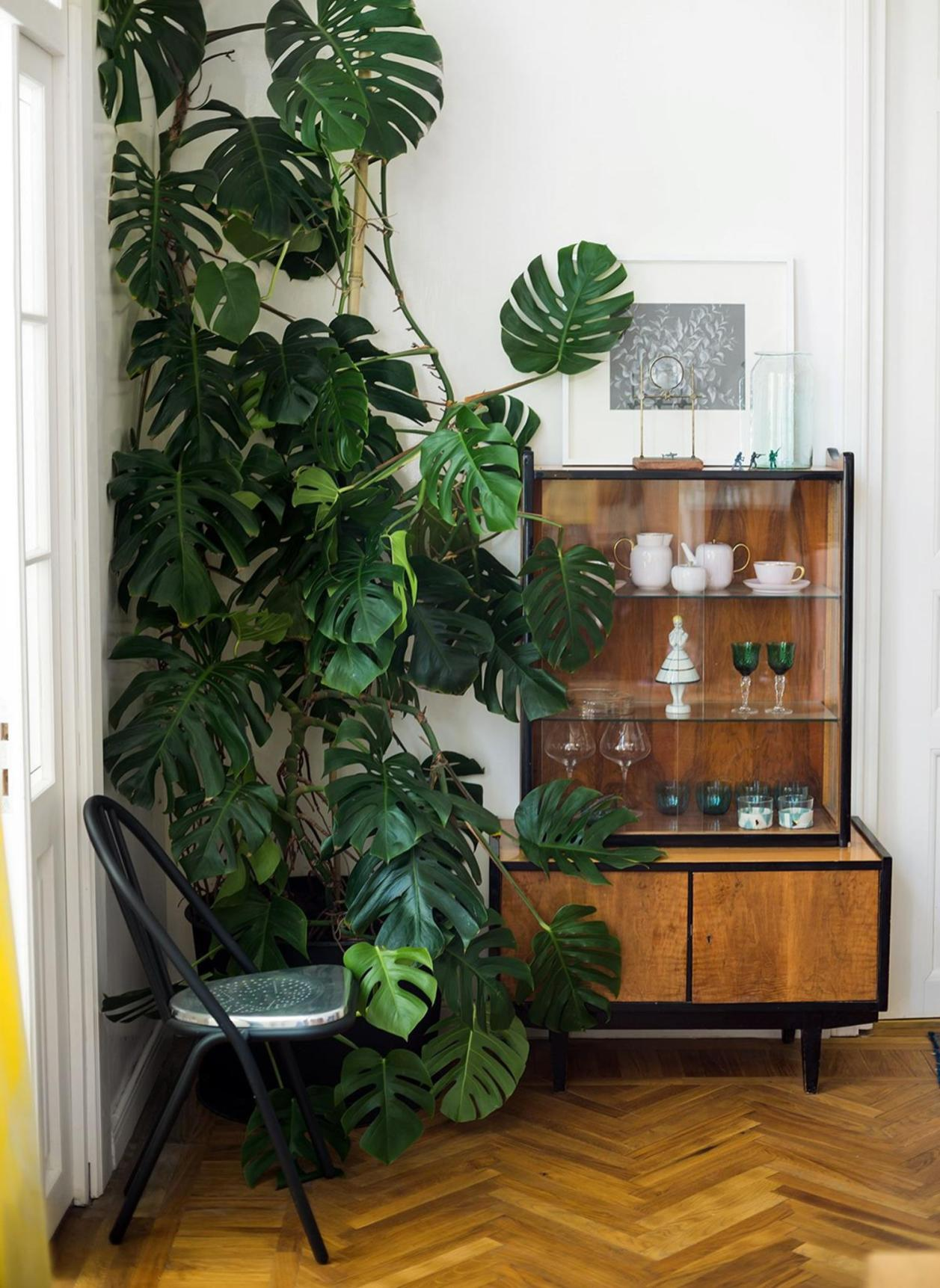 Urban Jungle Room Decor 2
