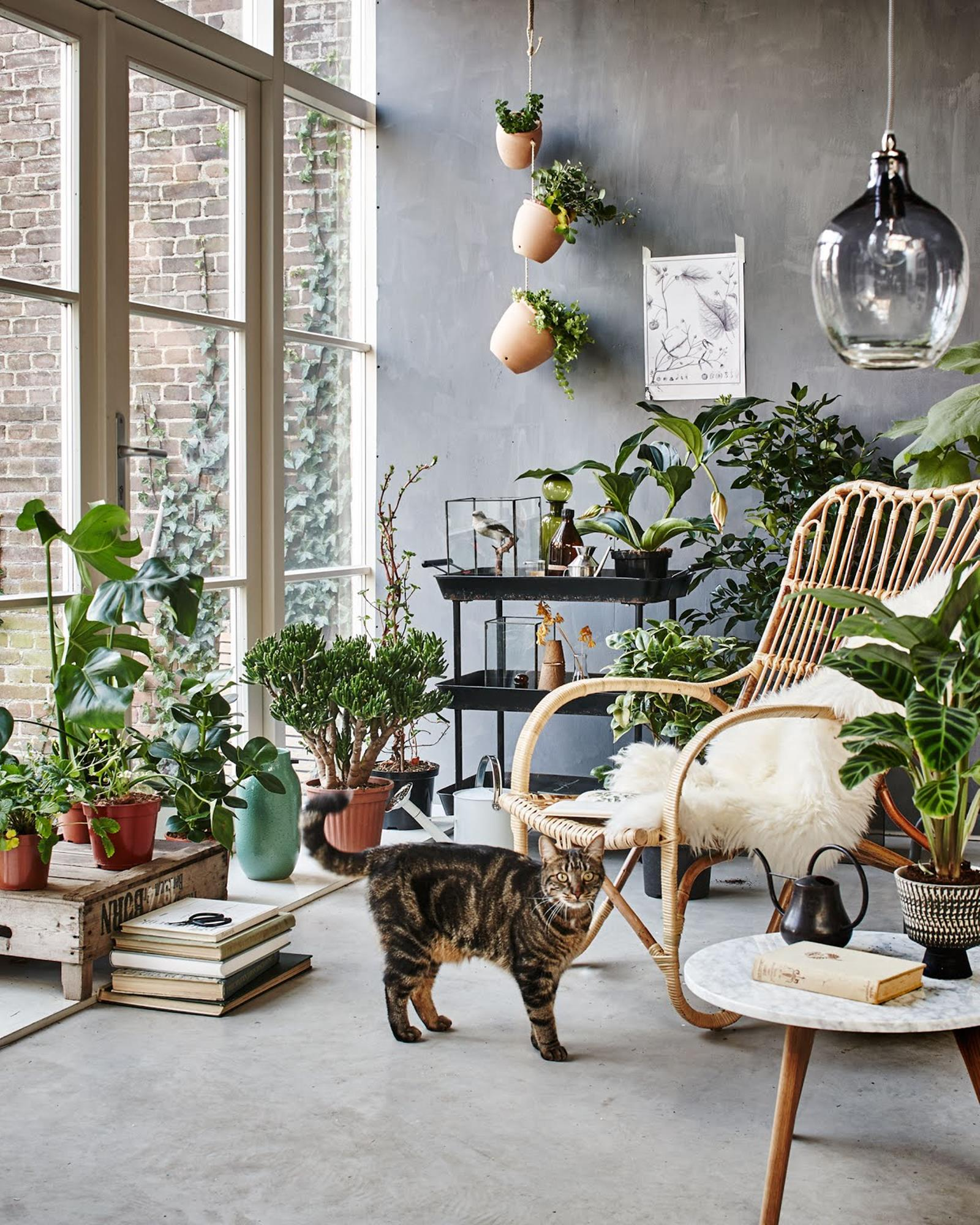 Urban Jungle Room Decor 31