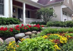 Perennial Plant Front Yard 21