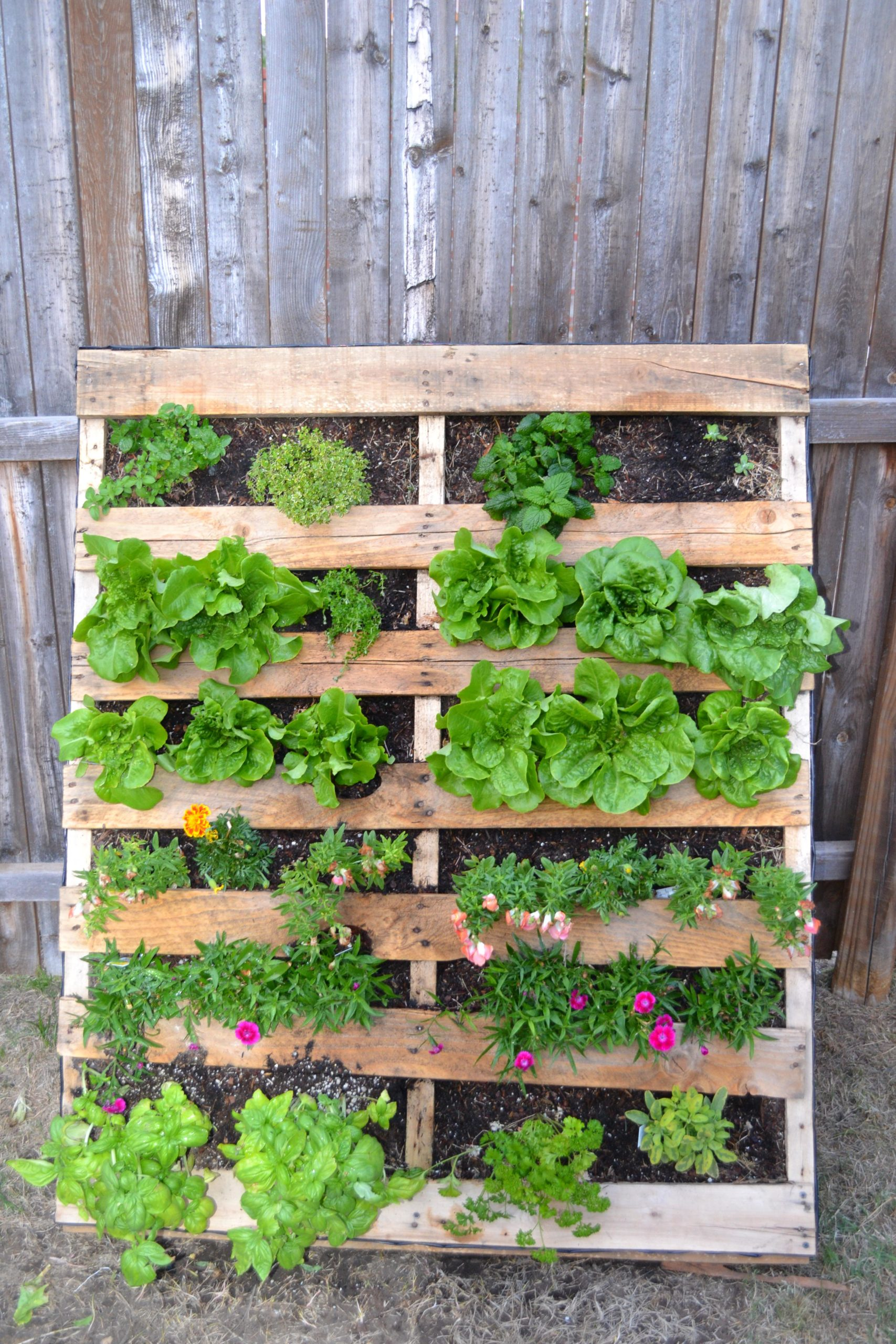Upcycled Wood Pallet Gardens 3