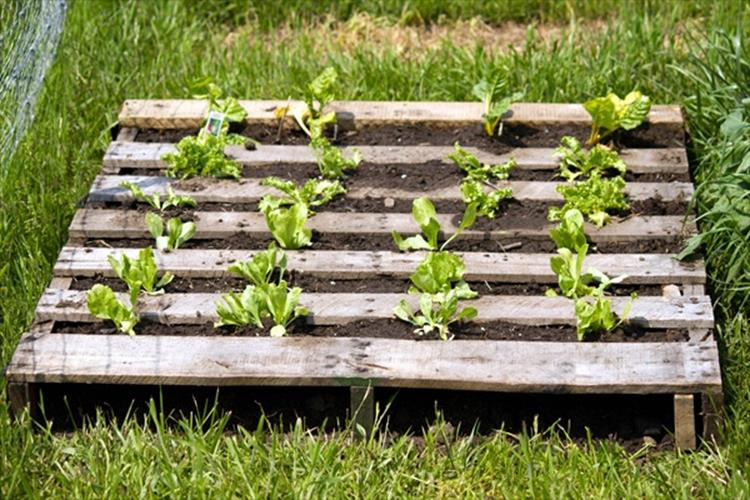 Gardening Ideas With Wood Pallets 14