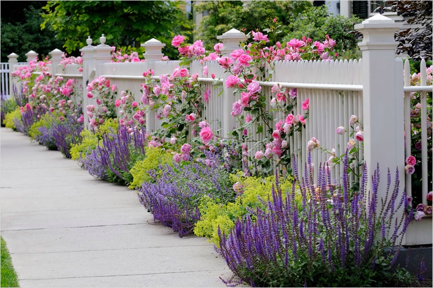 40 Best and Beautiful Climbing Flowers for Fences 61 129 Fence Designs & Ideas [front & Backyard Styles] Designing Idea 4