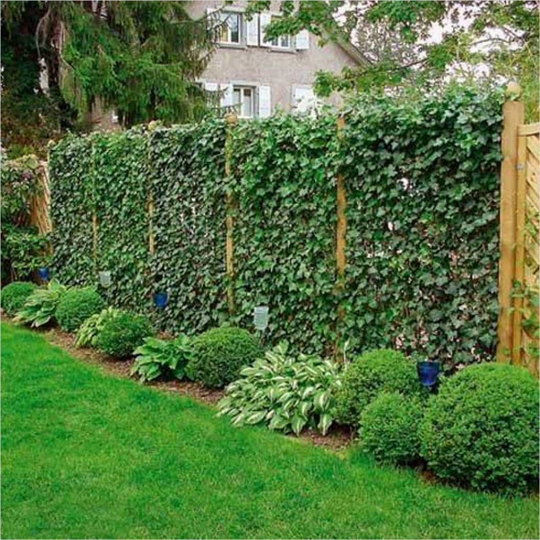40 Best and Beautiful Climbing Flowers for Fences 41 Garden Climbing Plant In Fences Versatile Garden Climbing Plant Ultimatechristoph Home 5