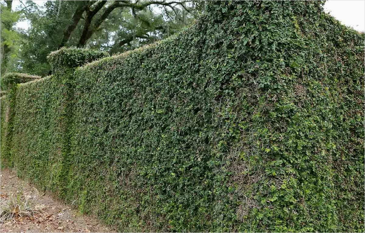 40 Best and Beautiful Climbing Flowers for Fences 32 Climbing Vines Plants for Fences Climbing Plants for Fences Ultimatechristoph Home Inspiration 3