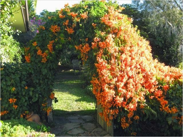 40 Best and Beautiful Climbing Flowers for Fences 65 Grow Food Slow Food Climbing Plants Greening Vertical Spaces 7