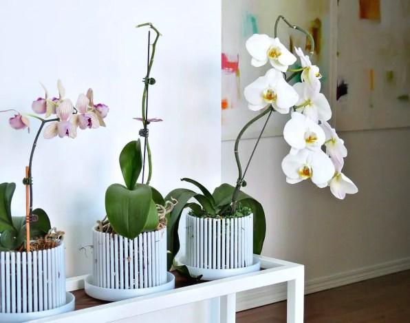 Walnut + White Metal Plant Stand