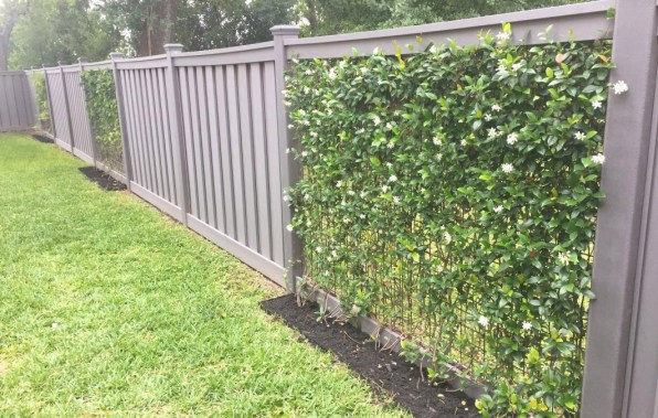 The Privacy Fence with Vines