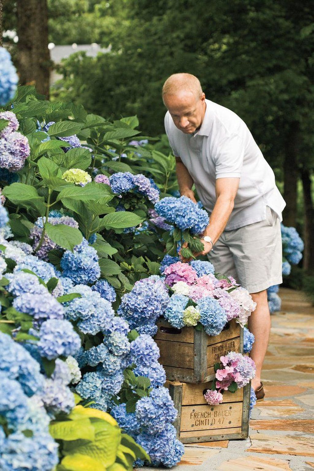 Inspiring Hydrangeas Landscaping Design Ideas To Copy Right Now 03