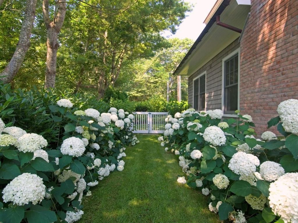 Inspiring Hydrangeas Landscaping Design Ideas To Copy Right Now 04