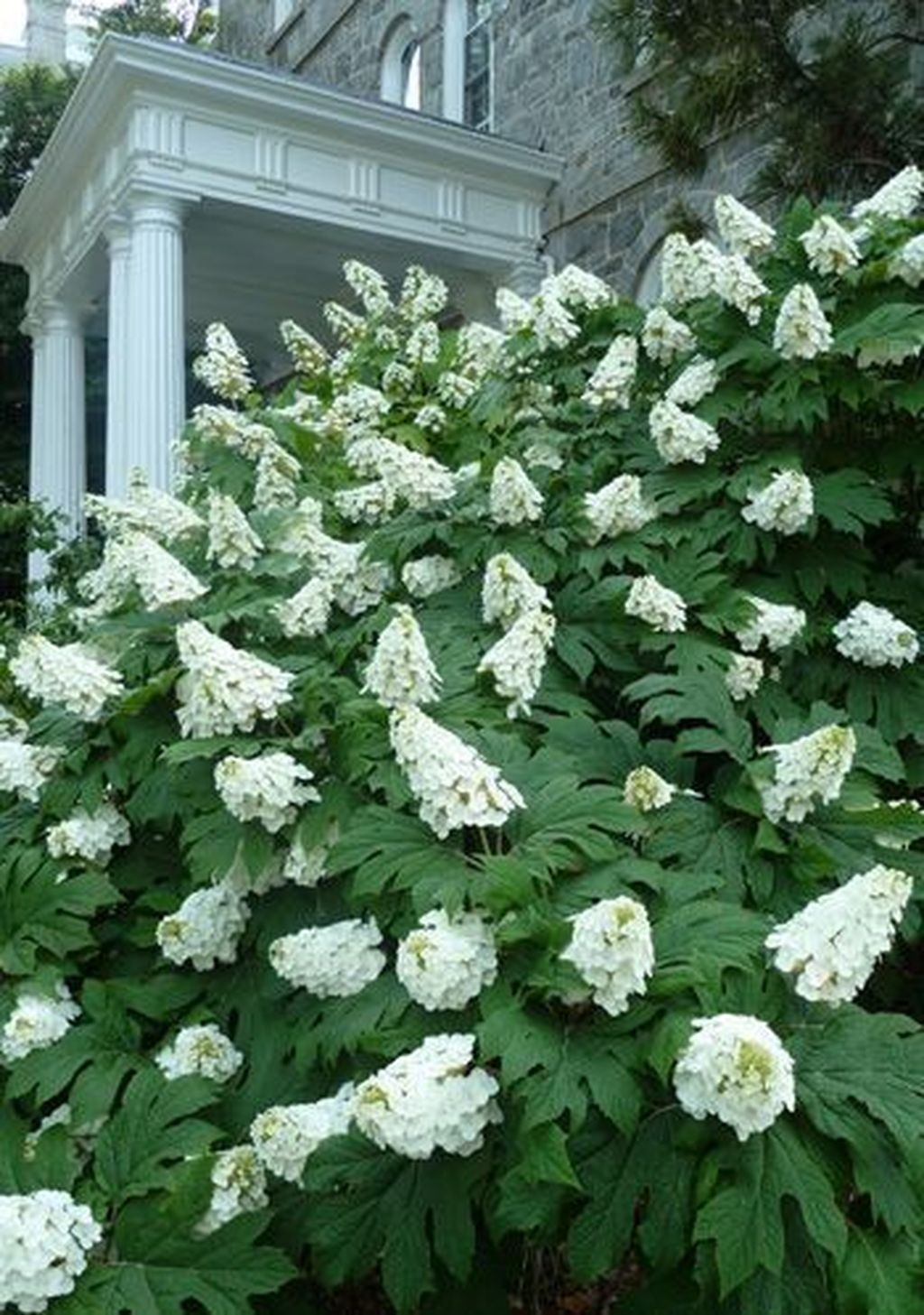 Inspiring Hydrangeas Landscaping Design Ideas To Copy Right Now 18