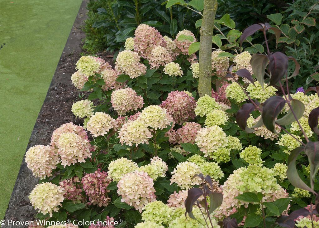 Inspiring Hydrangeas Landscaping Design Ideas To Copy Right Now 20