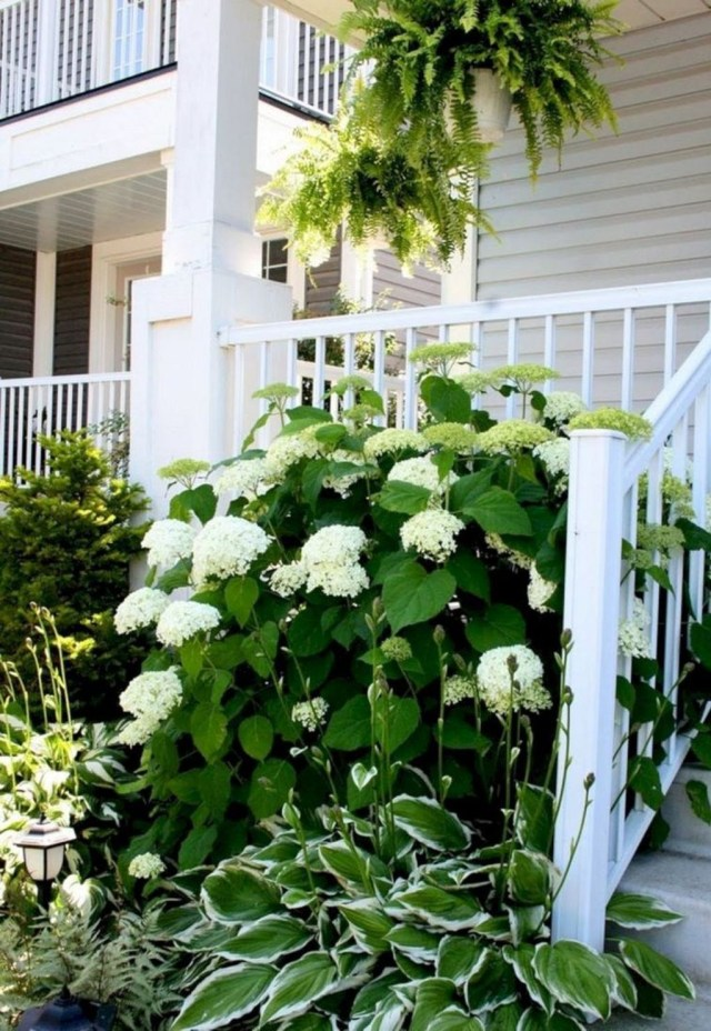 Inspiring Hydrangeas Landscaping Design Ideas To Copy Right Now 22