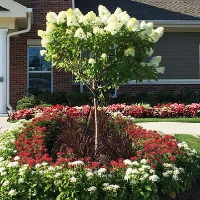 Inspiring Hydrangeas Landscaping Design Ideas To Copy Right Now 23