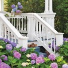 Inspiring Hydrangeas Landscaping Design Ideas To Copy Right Now 27