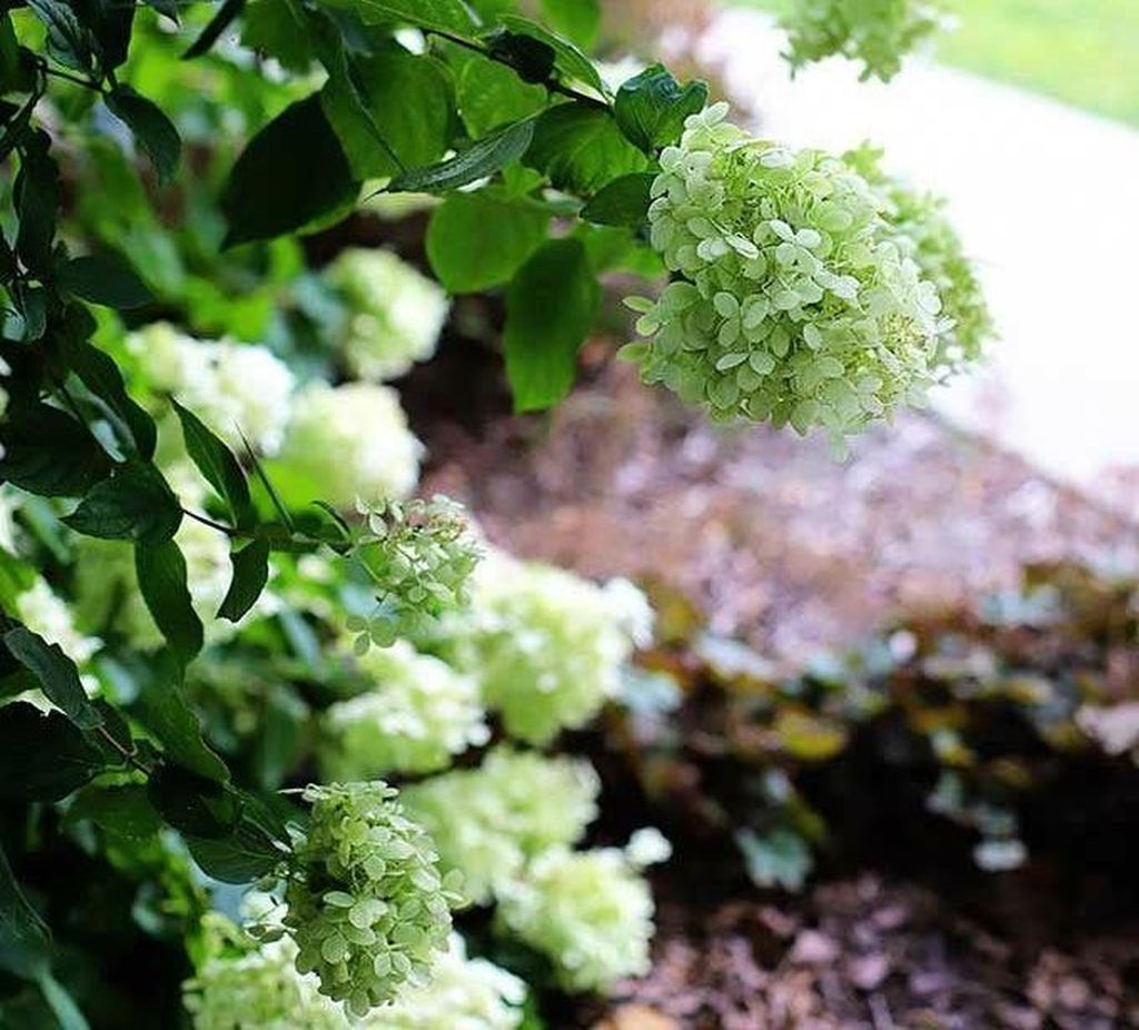 Inspiring Hydrangeas Landscaping Design Ideas To Copy Right Now 33