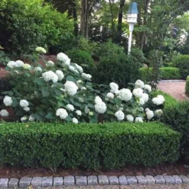 Inspiring Hydrangeas Landscaping Design Ideas To Copy Right Now 35