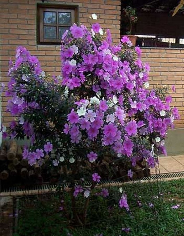 Lovely Flowering Tree Ideas For Home Yard To Copy Now 01