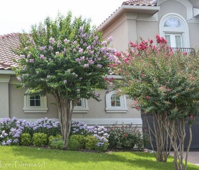 Lovely Flowering Tree Ideas For Home Yard To Copy Now 02