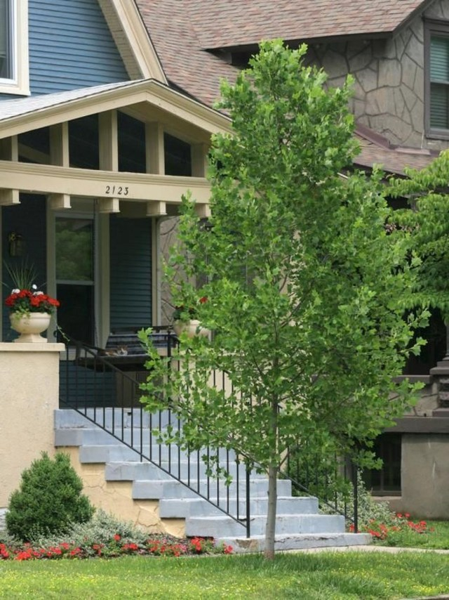 Lovely Flowering Tree Ideas For Home Yard To Copy Now 08